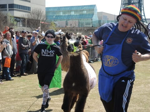 Nick Corrigan (left) and Randy Whaley, (right)  race towards the finish line in the second heat of The Great Llama Race.