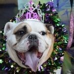 Mardi Growl 2020 benefits Young-Williams Animal Center